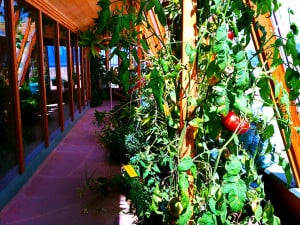 Prepper's Will - Earthship provides you with a reliable food source_