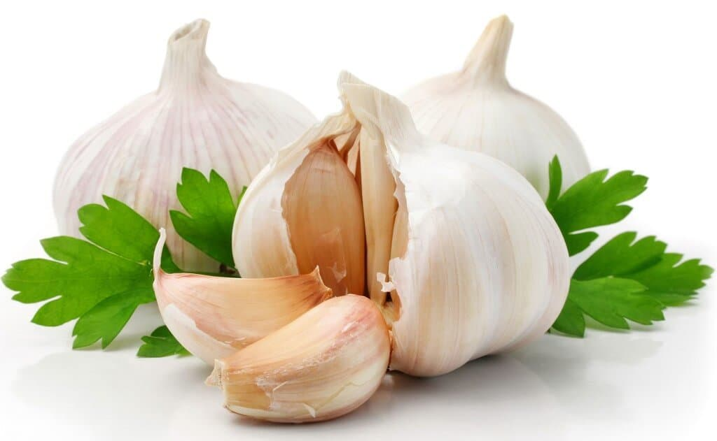 Garlic Gardening and its Benefits