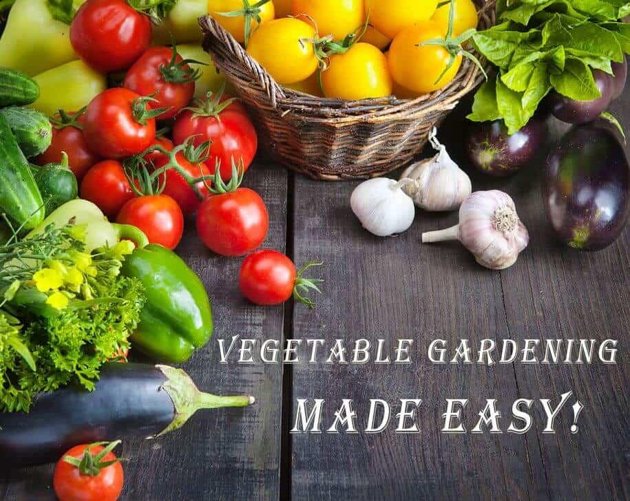 Vegetable Gardening Crash Course – Easy Start!