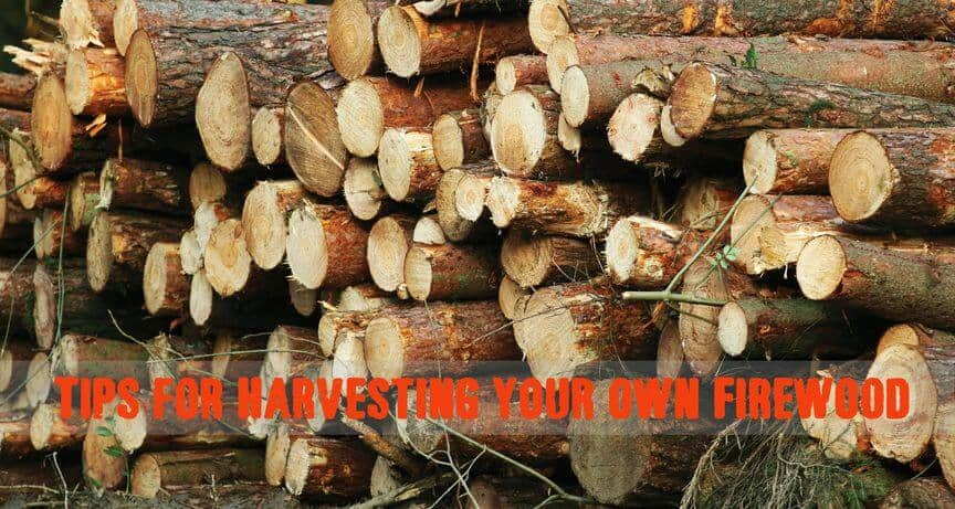 Harvesting Firewood – How To Do It Properly