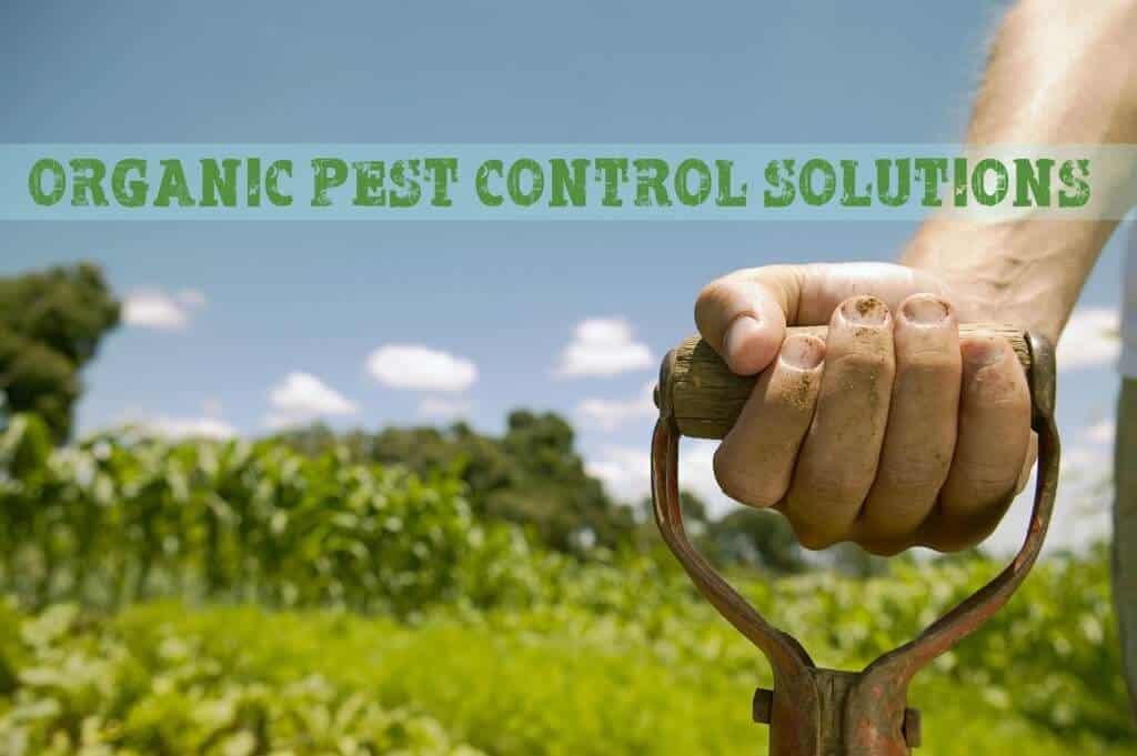 Organic Pest Control solutions