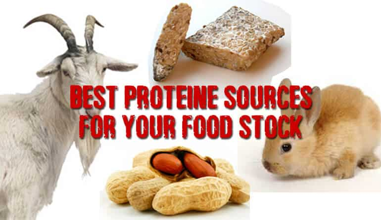 Protein sources for your pantry