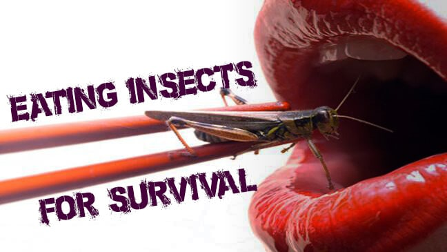 Edible Insects That Can Save Your Life