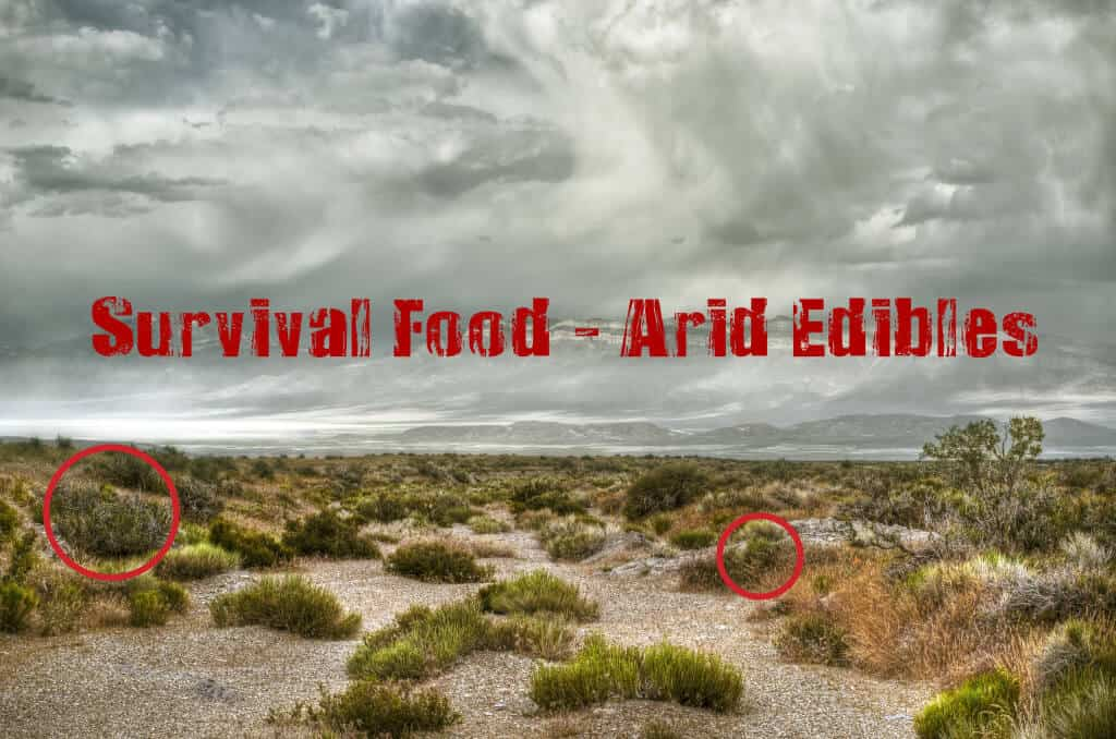Arid Edibles As Survival Food