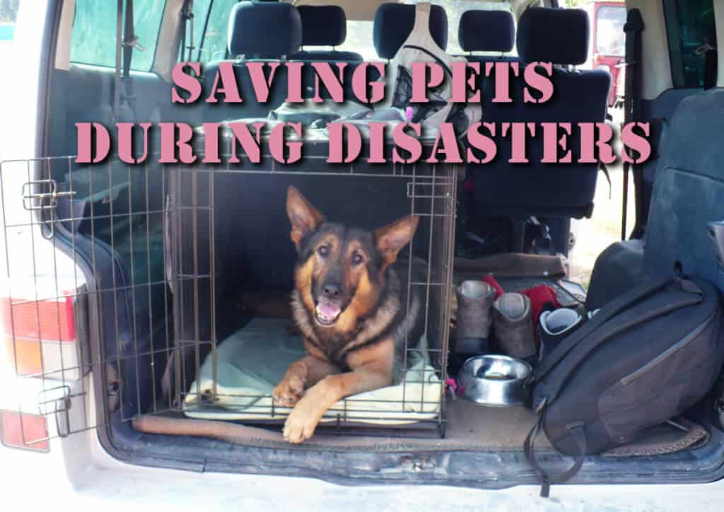 Saving Pets During Disasters And SHTF Events