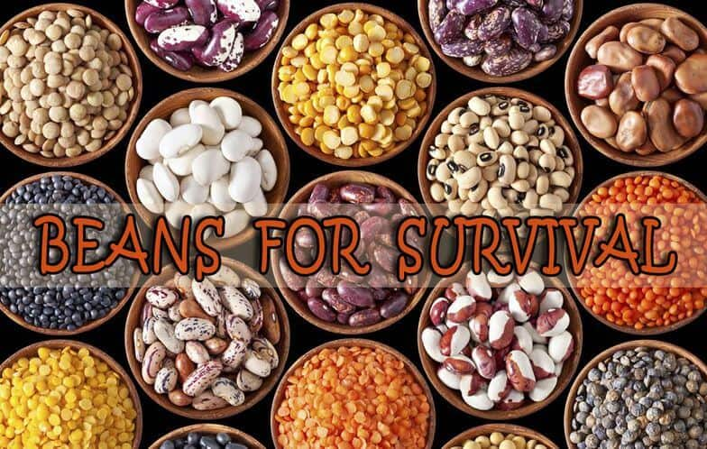 Back To Basics: Beans For Your Survival Pantry