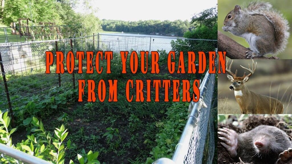Protect Your Garden From Critters