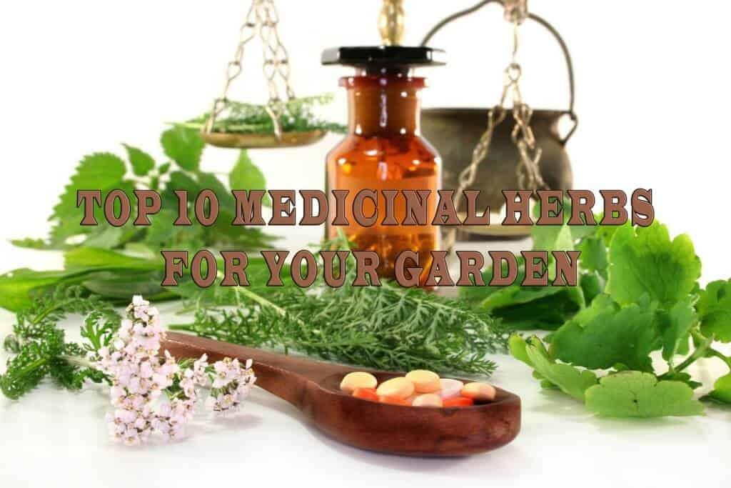 Top 10 Medicinal Herbs For Your Garden