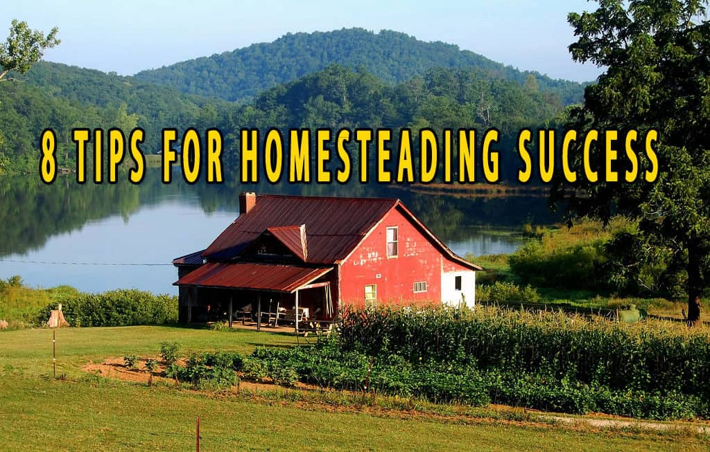 Eight Tips for Homesteading Success