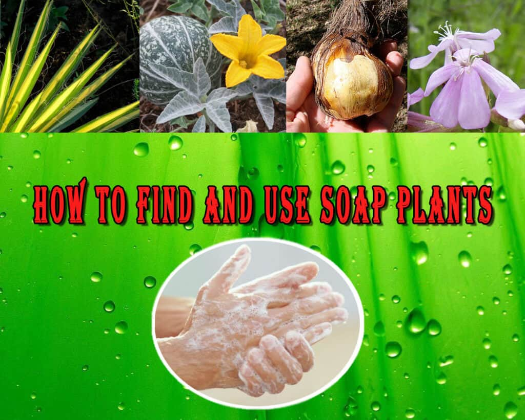 How To Find And Use Soap Plants
