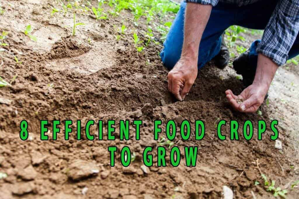 Eight efficient food crops to grow