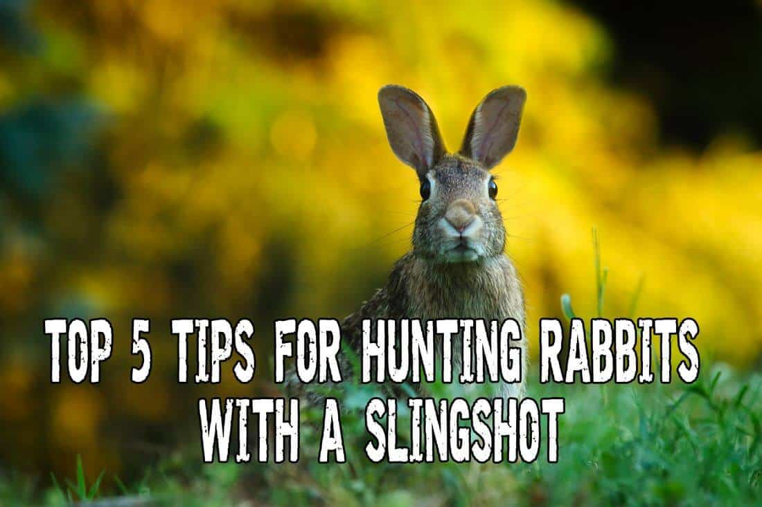Rabbit Hunting with Slingshot for Survival