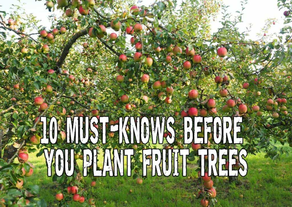 10 Must-Knows Before You Plant Fruit Trees