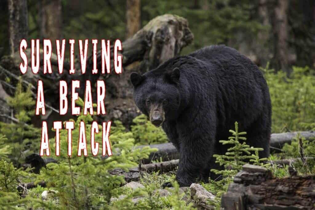 Surviving a Bear Attack