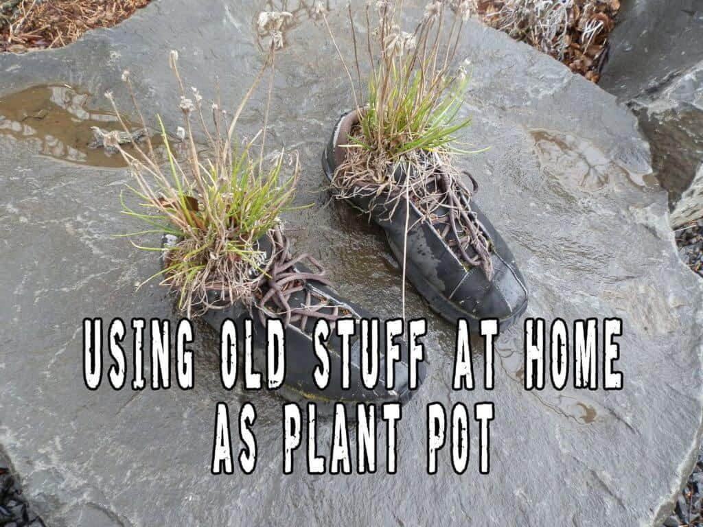 Making Use Of Old Stuff At Home As Plant Pot