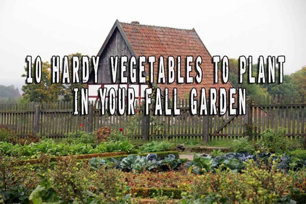 10 Hardy Vegetables To Plant In Your Fall Garden