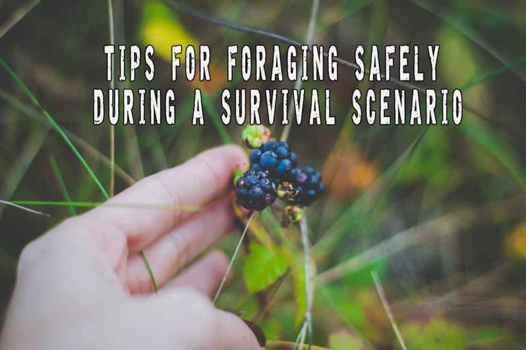Tips For Foraging Safely During A Survival Scenario