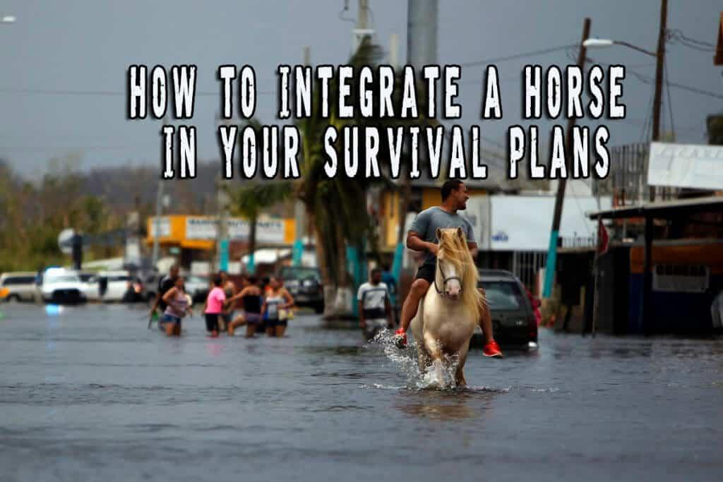 How To Integrate A Horse In Your Survival Plans