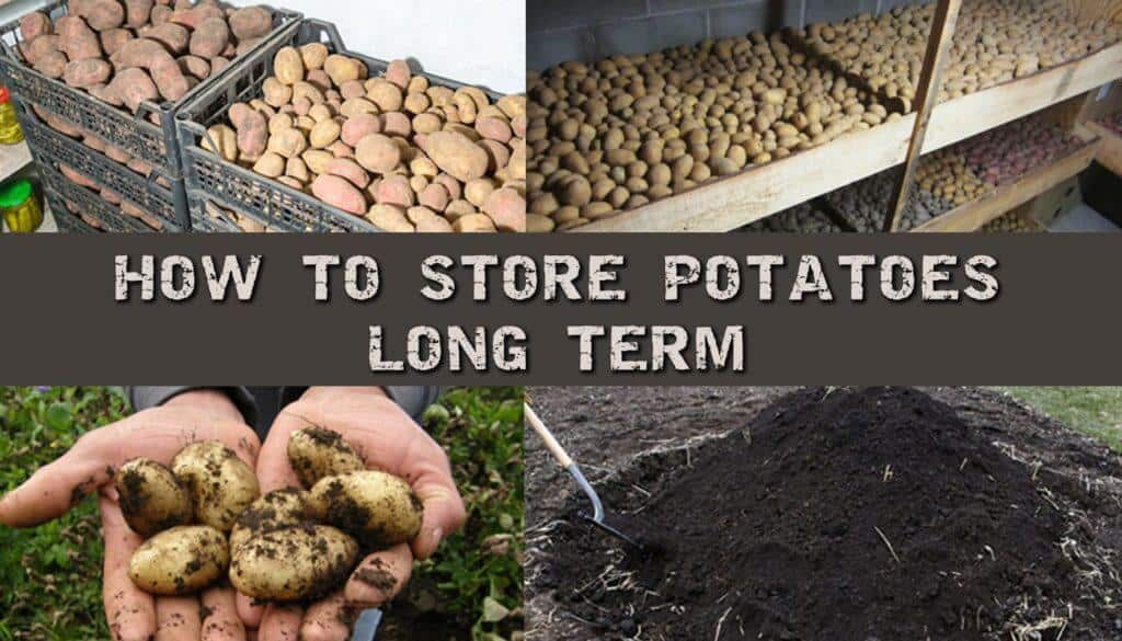 How To Store Potatoes Long Term