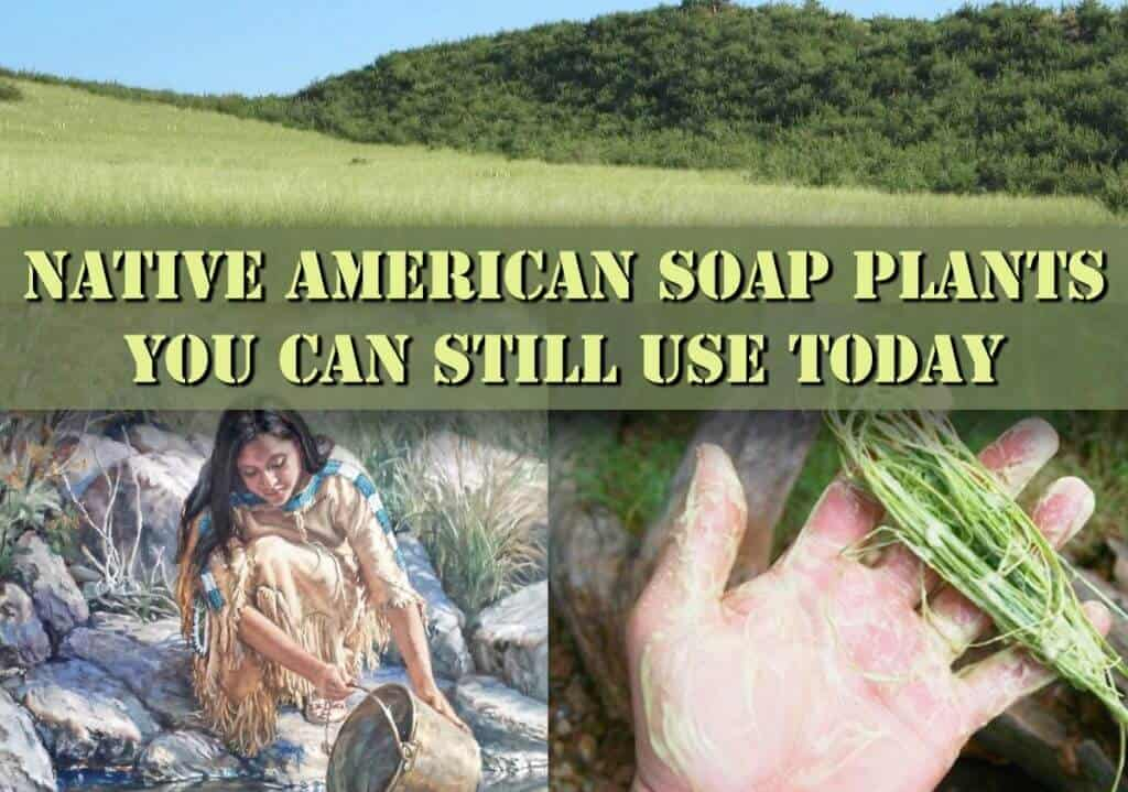 Native American Soap Plants You Can Still Find And Use Today