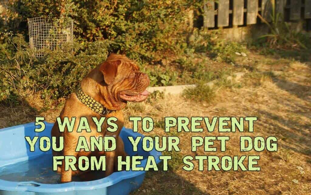 5 Ways To Prevent You And Your Pet Dog From Heat Stroke