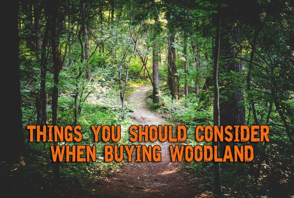 Things You Should Consider When Buying Woodland