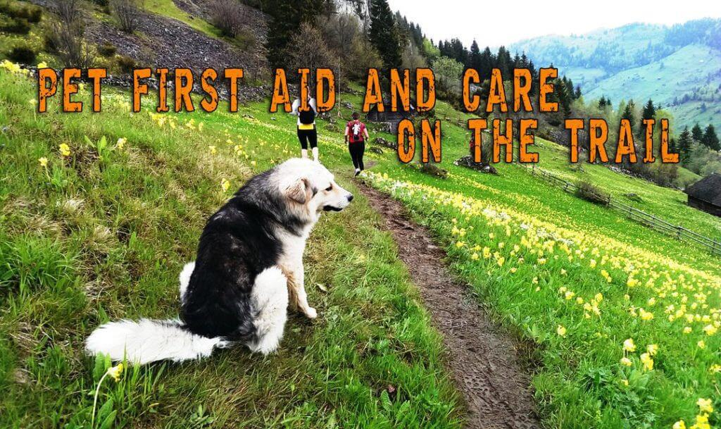Pet First Aid And Care On The Trail