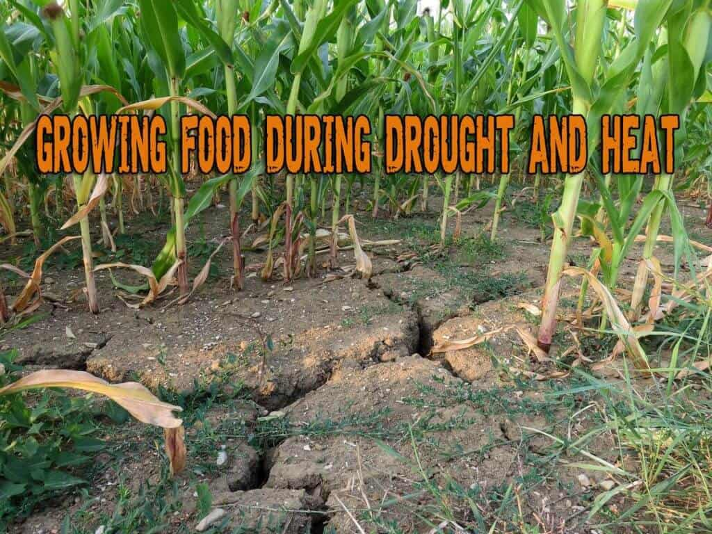 Growing Food When Drought And Heat Are Constant Problems