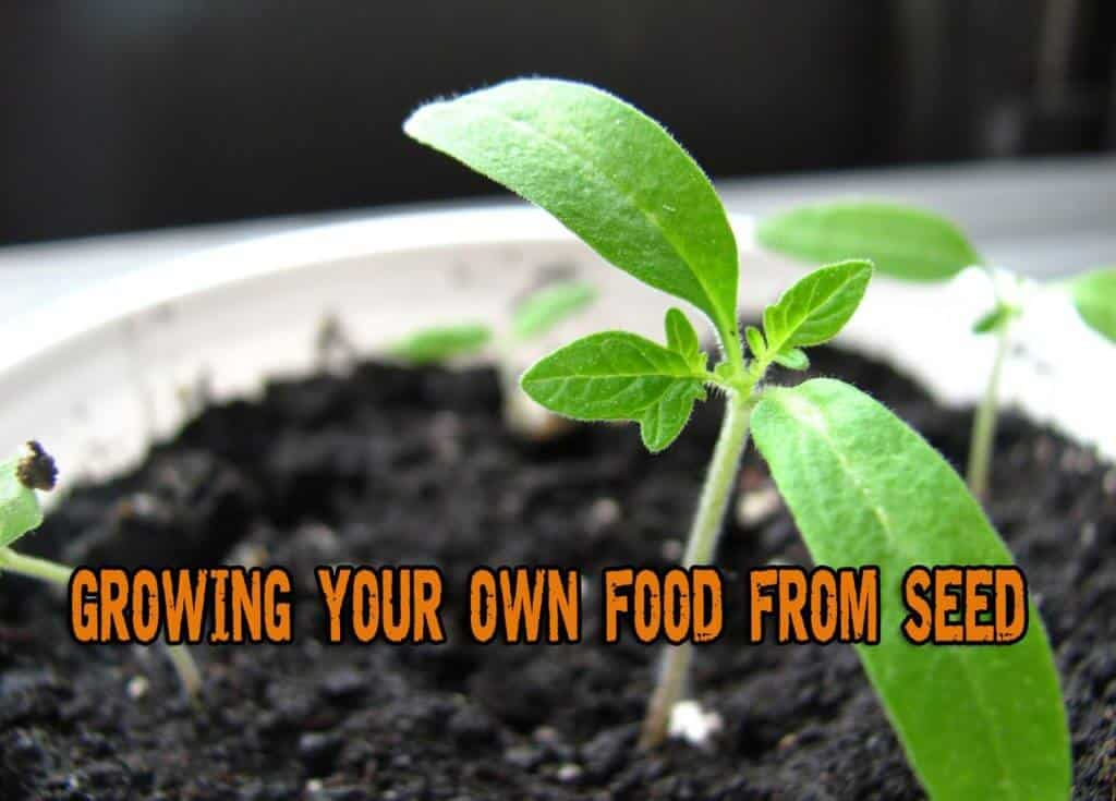 Growing Your Own Food From Seed