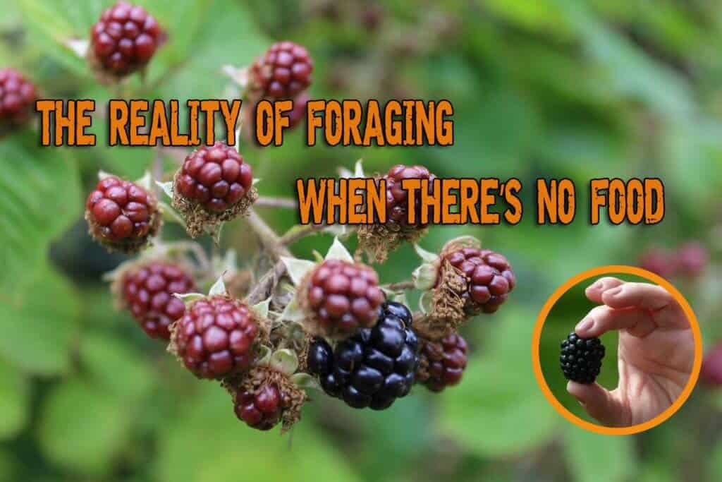 The Reality of Foraging When There's No Food