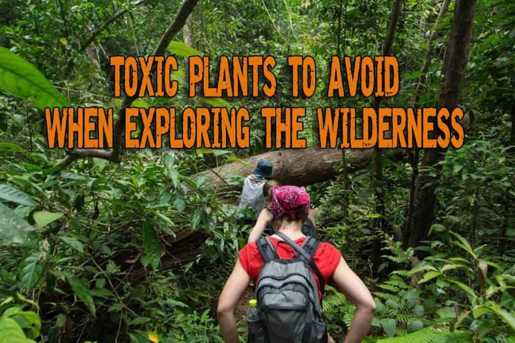 Noxious and Toxic Plants To Avoid When Exploring The Wilderness – Part 1