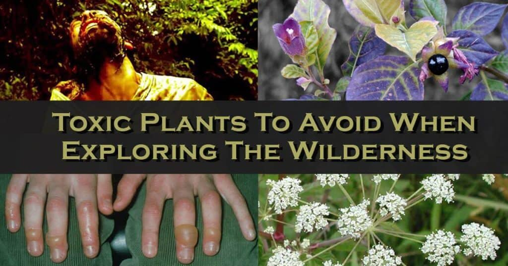 Noxious and Toxic Plants To Avoid When Exploring The Wilderness – Part 2