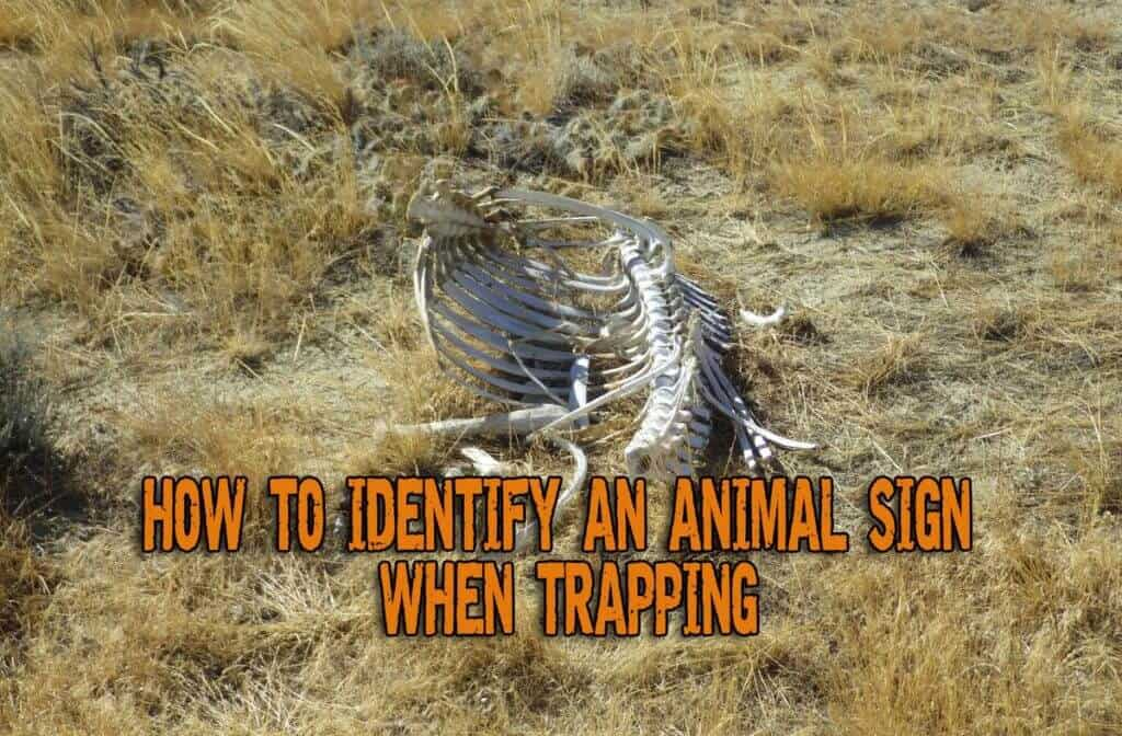 How To Identify An Animal Sign When Trapping