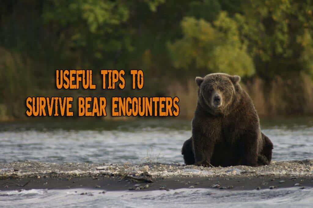 Useful Tips to Survive Bear Encounters