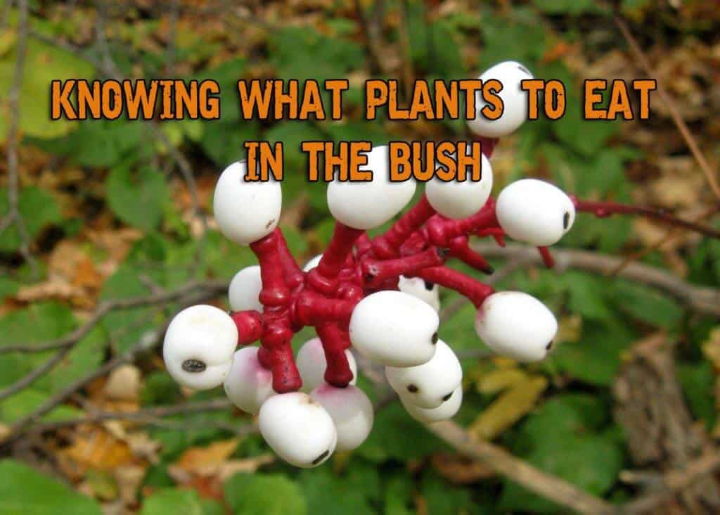 Knowing What Plants to Eat in the Bush