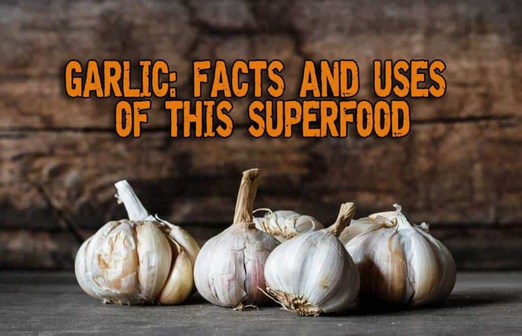 Garlic: Facts and Uses of This Superfood