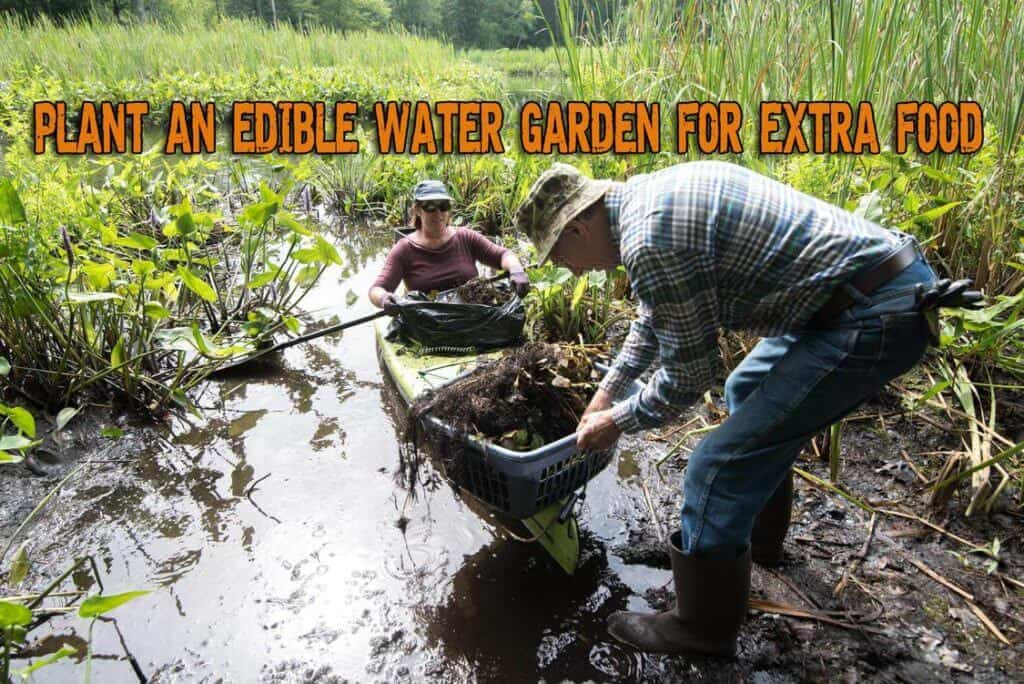 Plant An Edible Water Garden For Extra Food