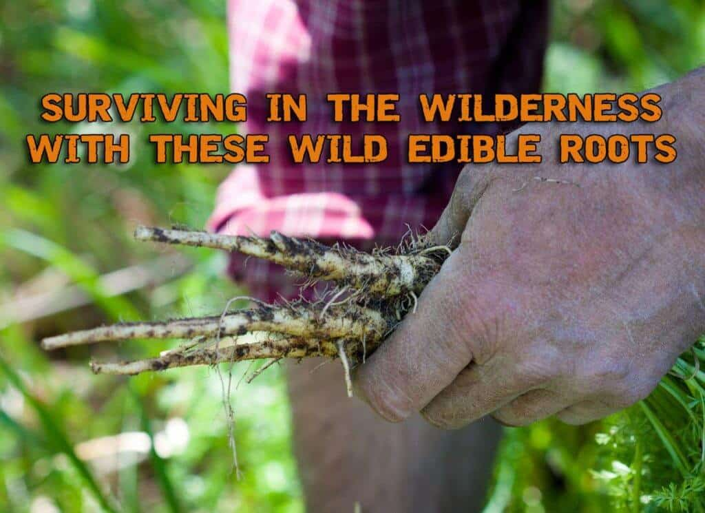 Surviving In The Wilderness With These Wild Edible Roots - Part 1