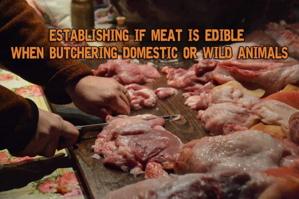 Establishing If The Meat Is Edible When Butchering Domestic Or Wild Animals