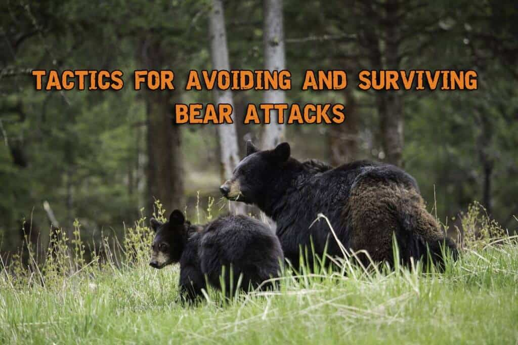 Tactics For Avoiding And Surviving Bear Attacks