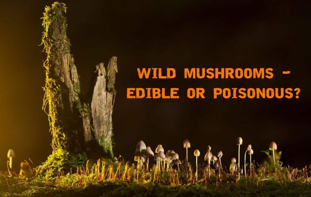 Wild Mushrooms – Can you Tell The Difference Between Edible And Poisonous?