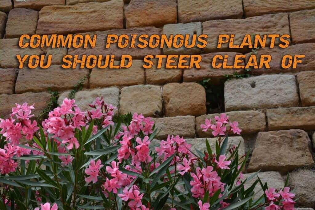 Common Poisonous Plants You Should Steer Clear Of