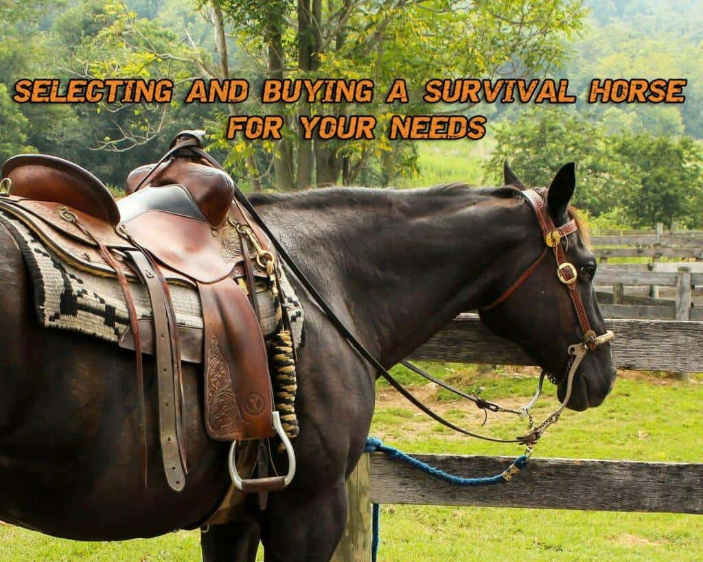 Selecting And Buying A Survival Horse For Your Needs