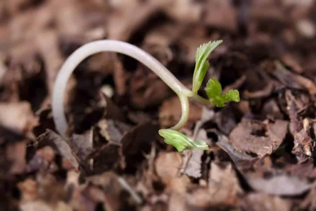 Saving Garden Seeds - seedling