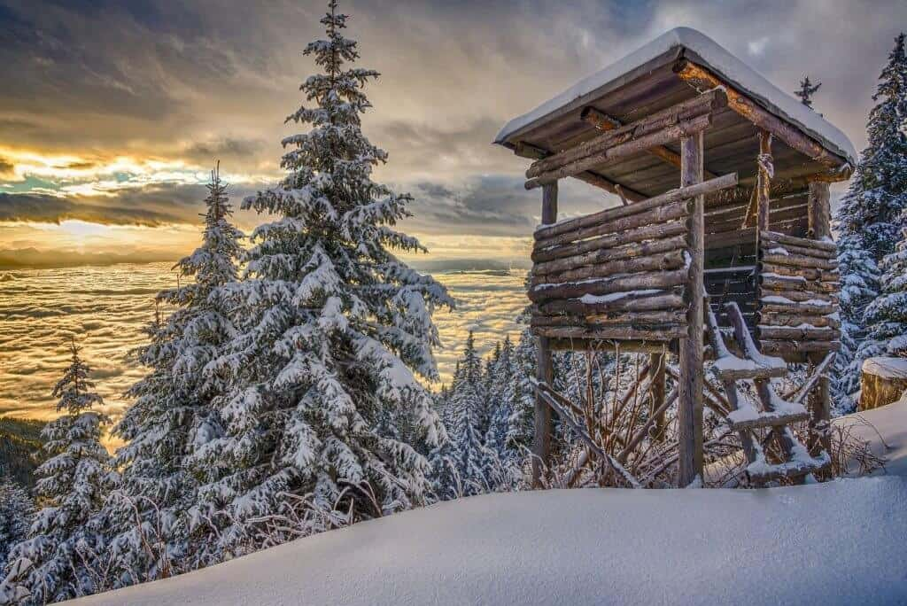 Hunting Post In Winter