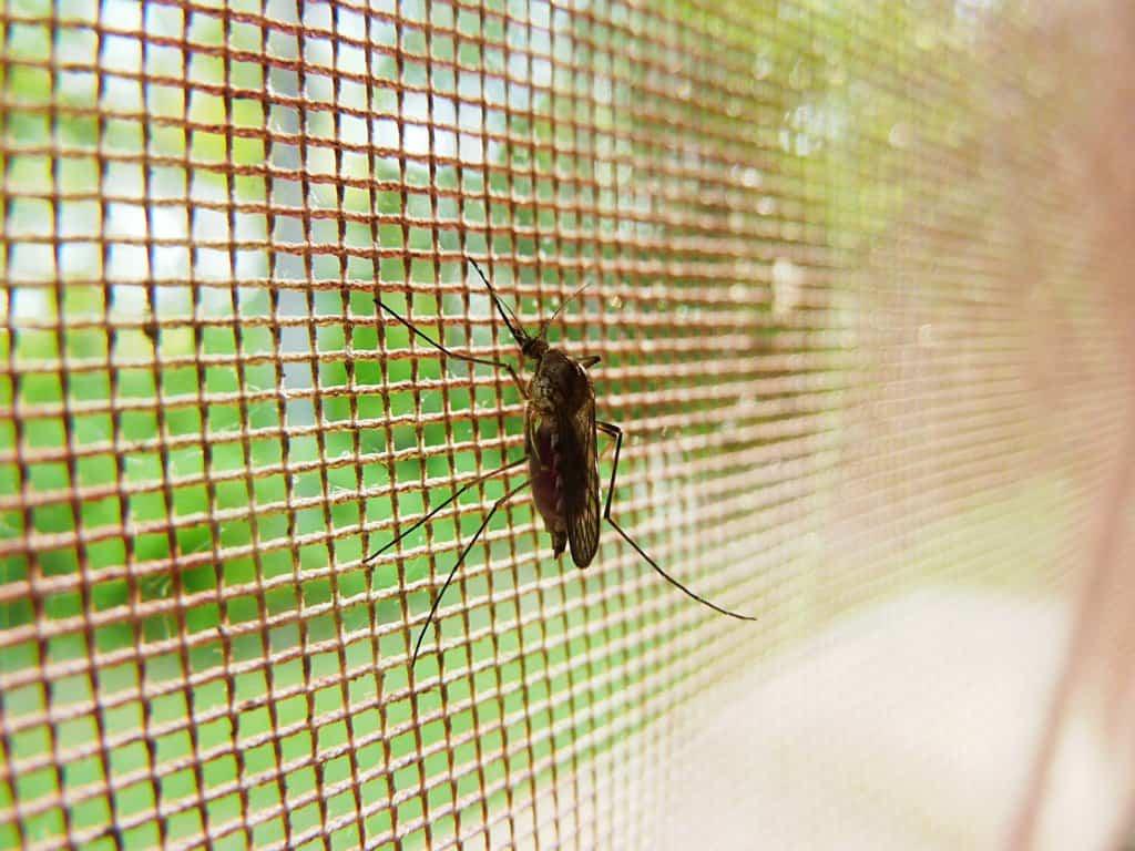 Raid For Pest