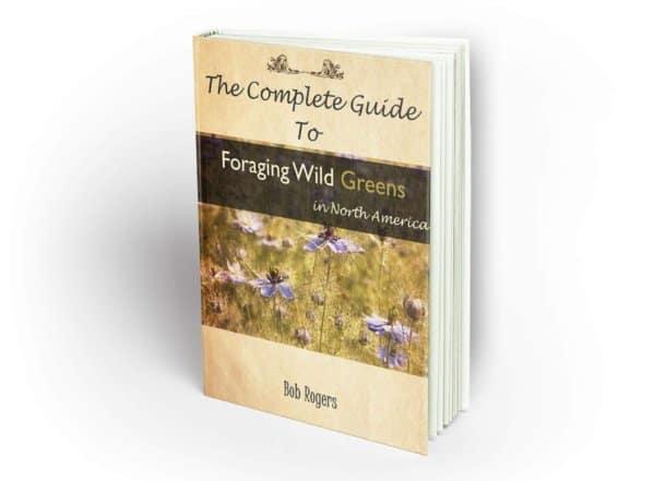 book cover e1586100880799