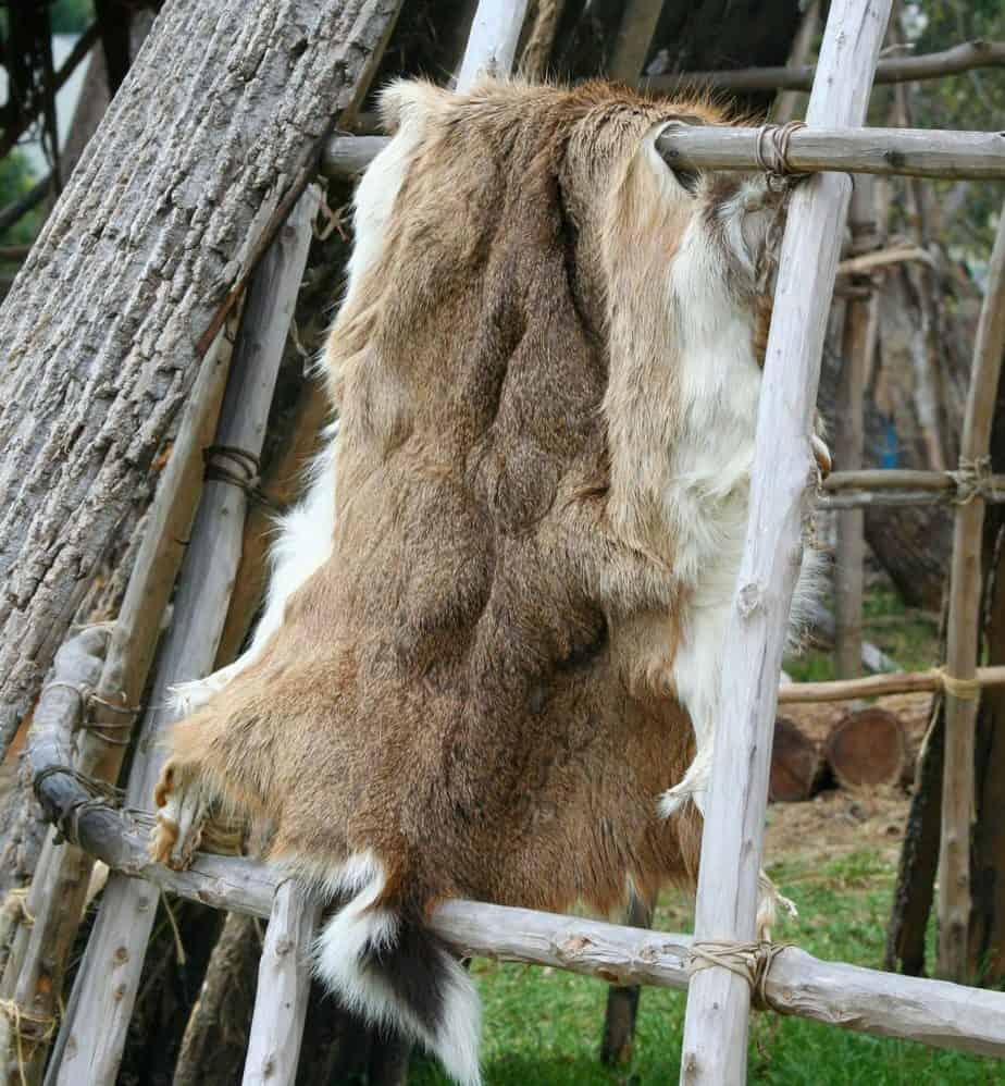 Deer Pelt Drying