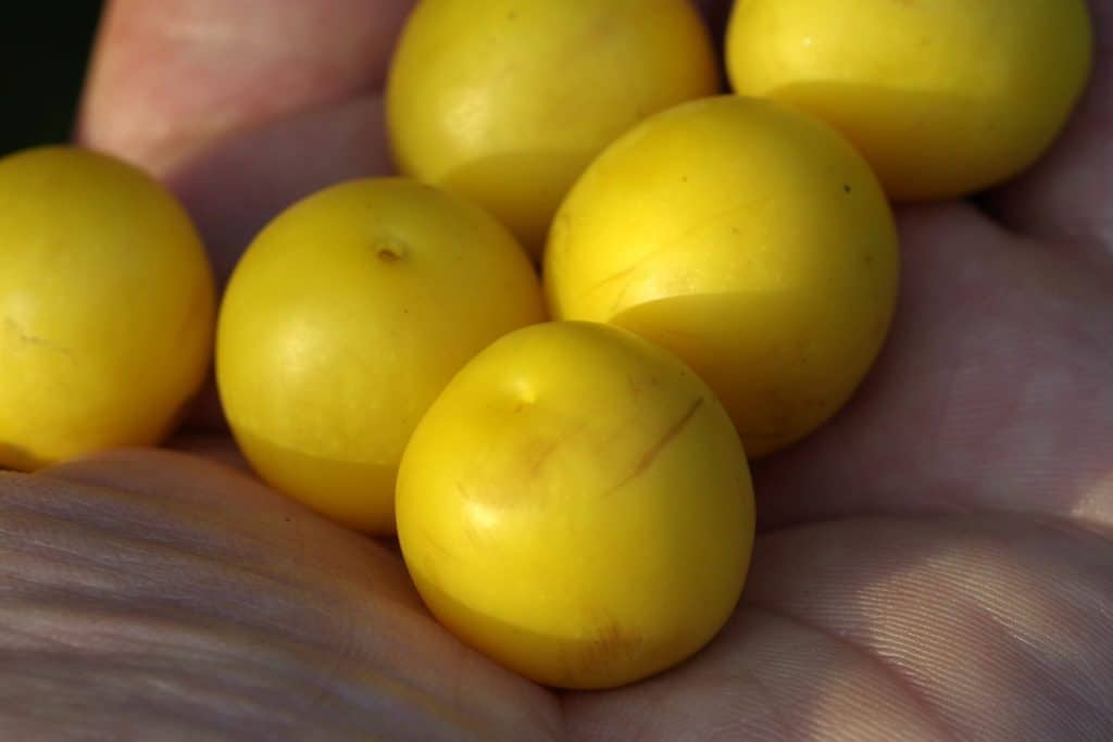 Scented Baits