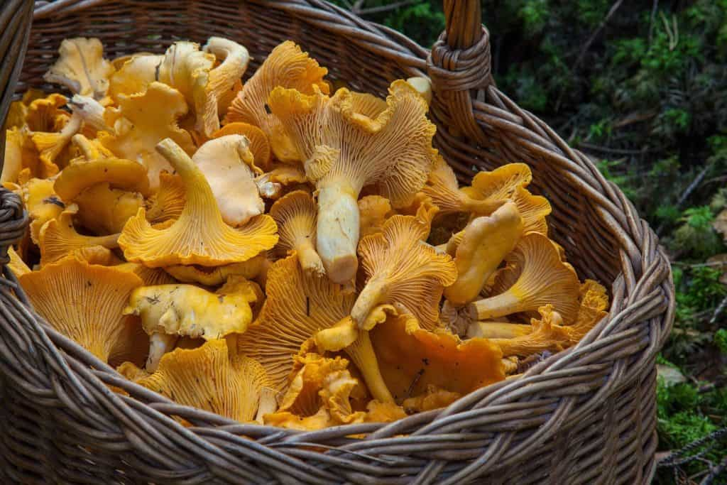 Forage For Wild Edibles